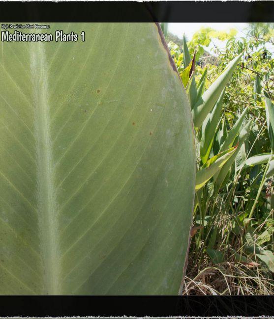 high-resolution-plant-resource:-mediterranean-plants-1