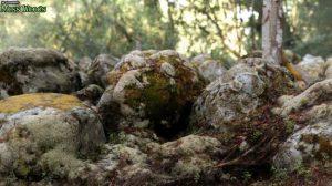 3d-scenery:-moss-woods