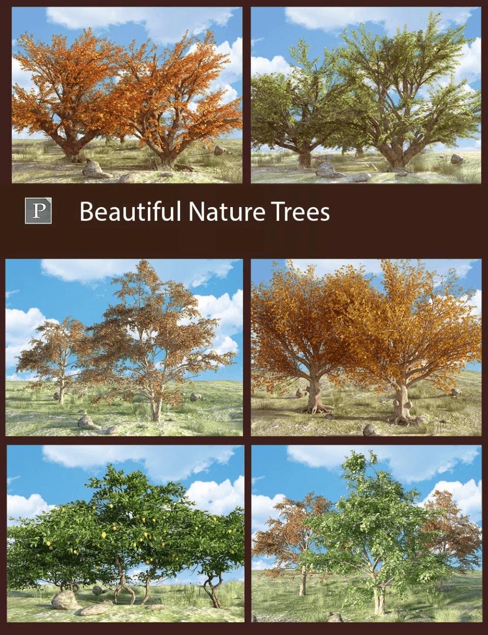 beautiful-nature-trees