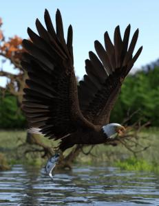deepsea's-eagle-poses-and-fish