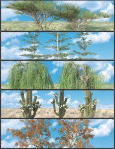 nature-plants-03