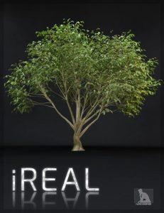 ireal-animated-hybrid-tree