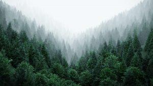real-trees-v1.1
